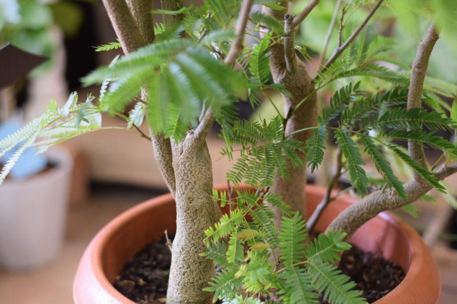 エバーフレッシュ 観葉植物